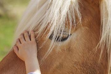 Equine Interactive Psychotherapy and Learning
